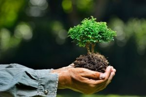 Plant a tree and win cash prize-BVP's initiative