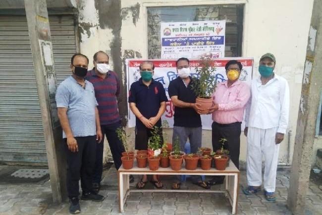 100 तुलसी के पौधे गमलों में बांटे