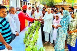 परिषद ने गुणकारी तुलसी के पौधे वितरित किए
