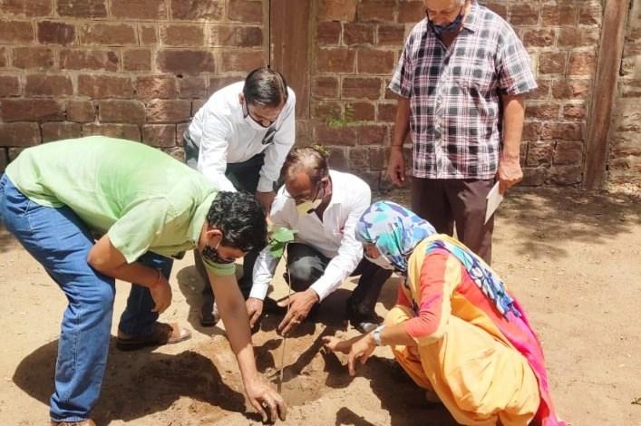 परिषद द्वारा औषधीय फलदार पौधे विभिन्न क्षेत्रों में लगाए गए